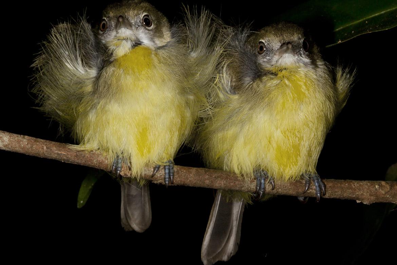 Vibrancy of Yellow